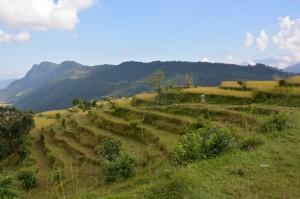 SIE wandert durch die Reisfelder