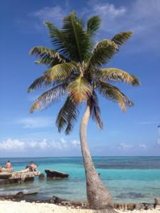 So paradiesisch sieht es auf der Insel der Entschleunigung aus