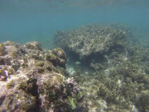 Das Riff vor dem Strand von Punta Uva