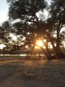 Die Affenfamilie schaut sich den Sonnenaufgang an