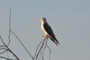 Ein Adler auf dem Baum